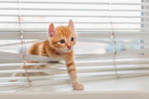 Kitten damaging venetain blinds